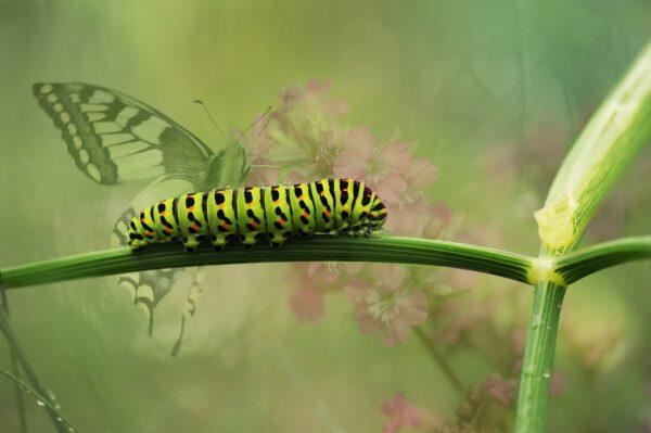 Raupen und Schmetterlinge