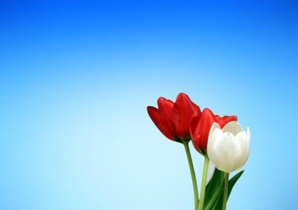 Die Blume singt ein Lied